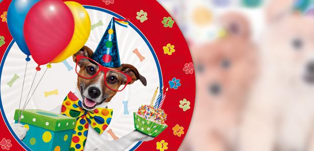Dog-party-coordinato-big-party